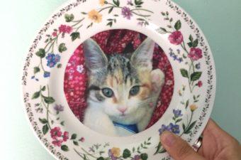 Harry Potter Professor Umbridge Inspired Cat Plates